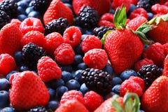 Strawberries, blueberries, raspberries and black berries. Fresh berries on white background Royalty Free Stock Photo
