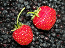 Strawberries and blueberries Stock Images