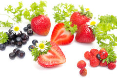 Strawberries and blueberries on white Stock Images