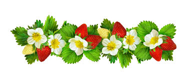 Strawberries border with flowers, berries and leaves. Isolated on white. Set Stock Image