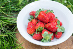 Strawberries in a bowl in the garden Royalty Free Stock Images