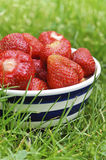 Strawberries in bowl on the grass Stock Image