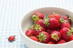Strawberries in a bowl and ladybird Royalty Free Stock Photo