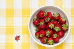 Strawberries in a bowl and ladybird Royalty Free Stock Photography