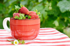 Strawberries in a bowl Stock Photos