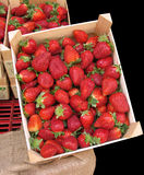 Strawberries in a box Royalty Free Stock Photography