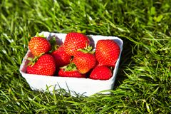 Strawberries in a box Royalty Free Stock Photos