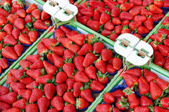 Strawberries in boxes. Stock Image