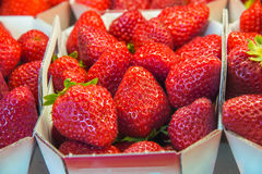 Strawberries in boxes Royalty Free Stock Image