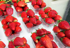 Strawberries in boxes as healthy food Stock Photo