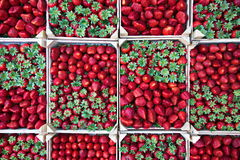 Strawberries in boxes. Stock Images