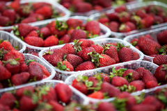 Strawberries in boxes Stock Photography