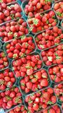 Strawberries in boxes Royalty Free Stock Photography