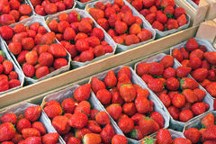 Strawberries in boxes for sale Stock Photography