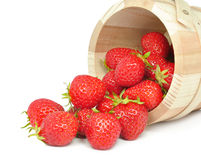 Strawberries in a bucket Stock Photography