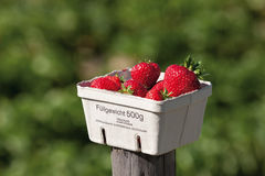 Strawberries in cardboard box,close up Stock Photography