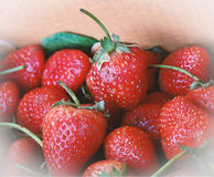 Strawberries in the carton. vintage color tone. royalty free stock photos