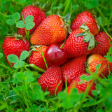 Strawberries and cherry on green grass Stock Photos