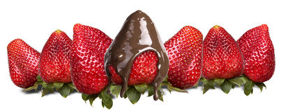 Strawberries and chocolate isolated Stock Photos
