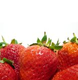 Strawberries close-up. Close-up  red juicy strawberries on white, background Royalty Free Stock Photo