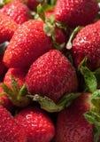 Strawberries close-up Stock Image