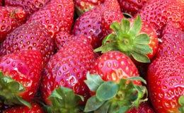 Strawberries Royalty Free Stock Photos