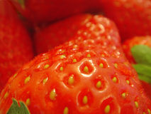 Strawberries closeup Stock Images