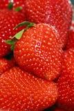 Strawberries 1 Stock Photo