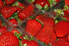 Strawberries 4 Stock Image