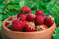 Strawberries closeup. Ripe Strawberry In The Fruit Garden, Old W Royalty Free Stock Photo