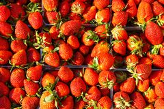 Strawberries in a container. Ripe berries stock images