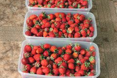 Strawberries in containers. Tasty berry. Red strawberry royalty free stock photos