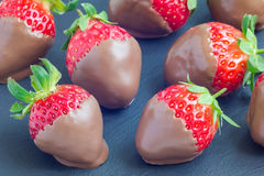 Strawberries covered with milk chocolate on a grey slate, stone Stock Photos
