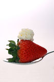 Strawberries and cream mmmm. A mouthwatering strawberry with cream stock photos