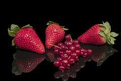 Strawberries and currant on a reflective surface. With a black background royalty free stock photo