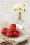 Strawberries and daisies Stock Photos