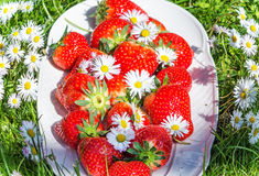 Strawberries with daisies Royalty Free Stock Photo