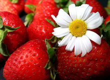 Strawberries and daisy Stock Images