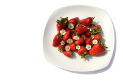Strawberries with daisy Stock Image