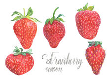 Strawberries in different shapes. Watercolor strawberries and lettering isolated on white background Stock Images
