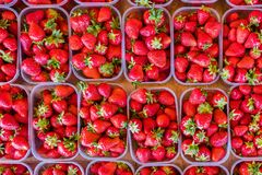 Strawberries displayed in plastic boxes flat lay view.  royalty free stock image