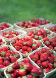 Strawberries: Dog's-eye view. These gorgeous ripe strawberries are piled high on the grass at a rural farmer's market Royalty Free Stock Photo