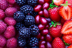 Strawberries, dogwood, blackberries and Stock Photos
