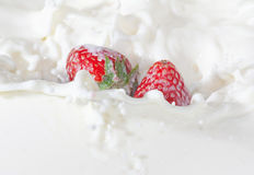 Strawberries falling into the milk with a splash Royalty Free Stock Photos