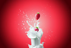 Strawberries falls in milk. View of nice fresh red strawberry falling down in to the glass milk making a big splash on a red background Royalty Free Stock Images