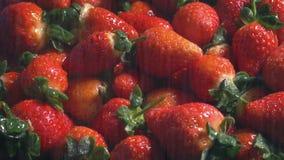 Strawberries in fine water spray