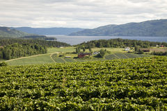 Strawberries and fjords Stock Images
