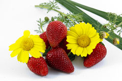 Strawberries and flowers Royalty Free Stock Images