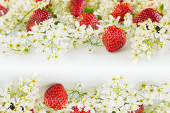 Strawberries with flowers of bird cherry on a white background. Sunny spring background.  Border with the copy space. Frame with strawberry background Royalty Free Stock Images