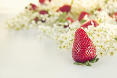 Strawberries with flowers of bird cherry on a white background. Sunny spring background.  Border with the copy space. Frame with s Stock Photo